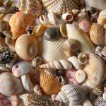 Are you a social media seashell?